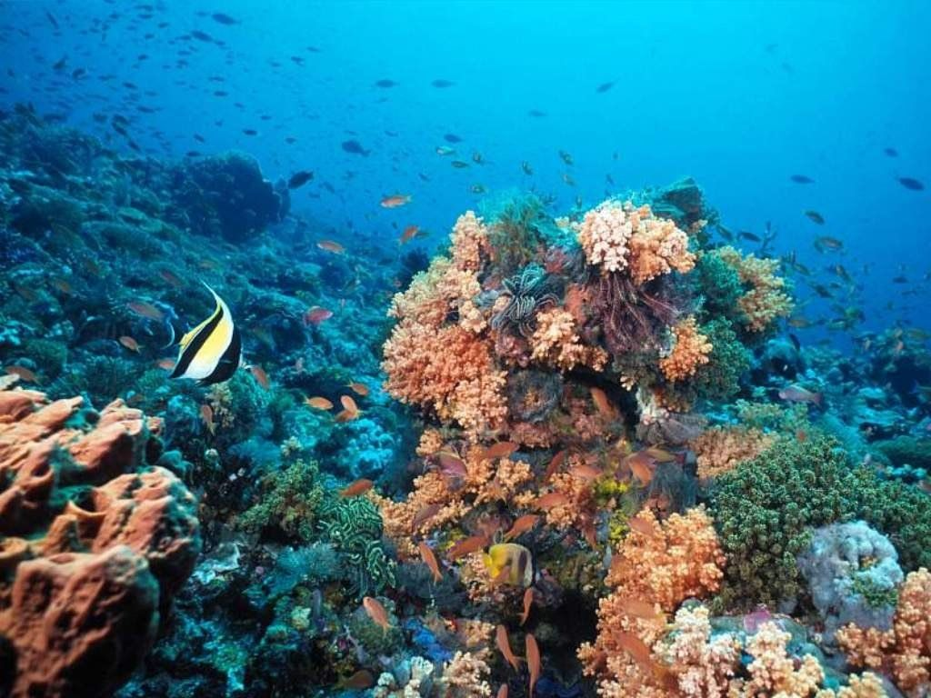 Fonds ecran ocean mer for Photo ecran mer