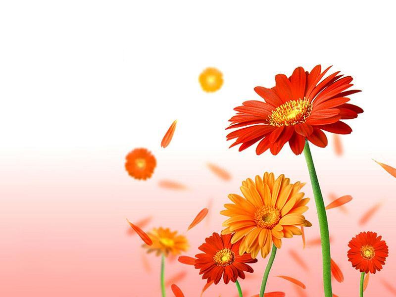 Fonds ecran divers - Catalogue de fleurs gratuit ...